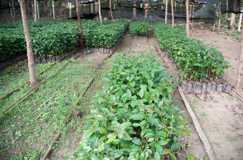 MADRETERRA-CAFFE-caffè-compostabile-ecosostenibile